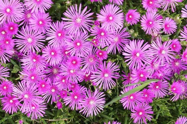 「花の名は。」簡単に花の名前を調べる方法