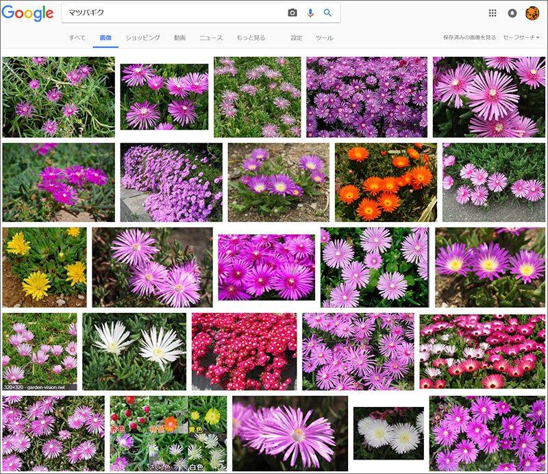 名前 花 を 調べる アプリ の 花の名前を簡単に調べられるアプリ:日経xwoman